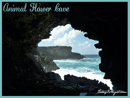 todayimight.com | Barbados | Animal Flower Cave