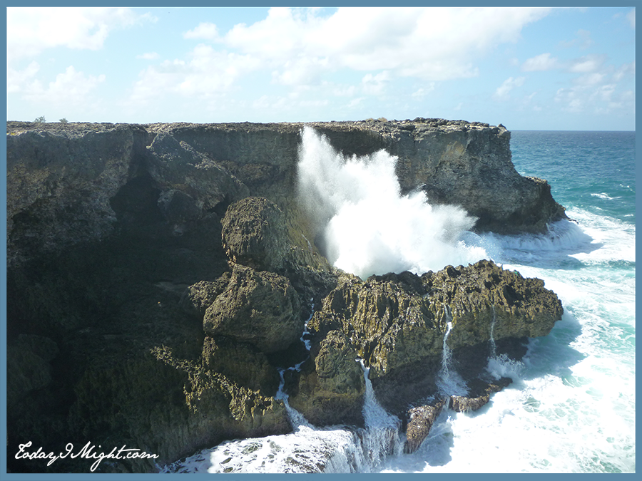 Barbados Animal Flower Cave Today I Might