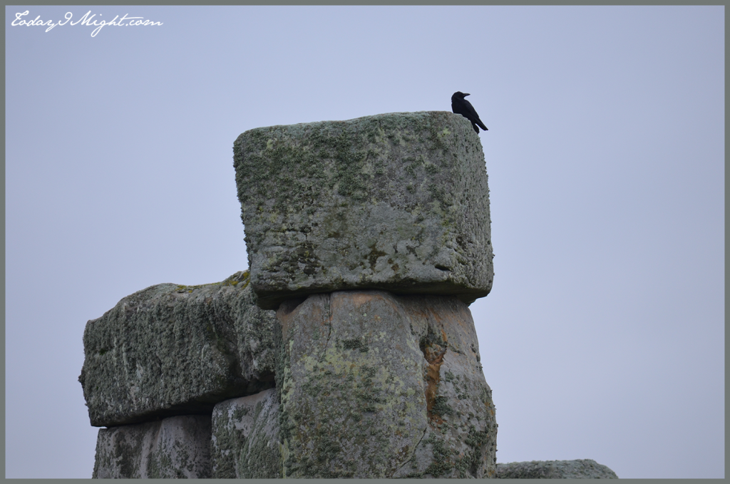 todayimight.com | London | Bird on Stonehenge