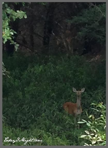 todayimight.com | June Jumpstart | Deer On Trail
