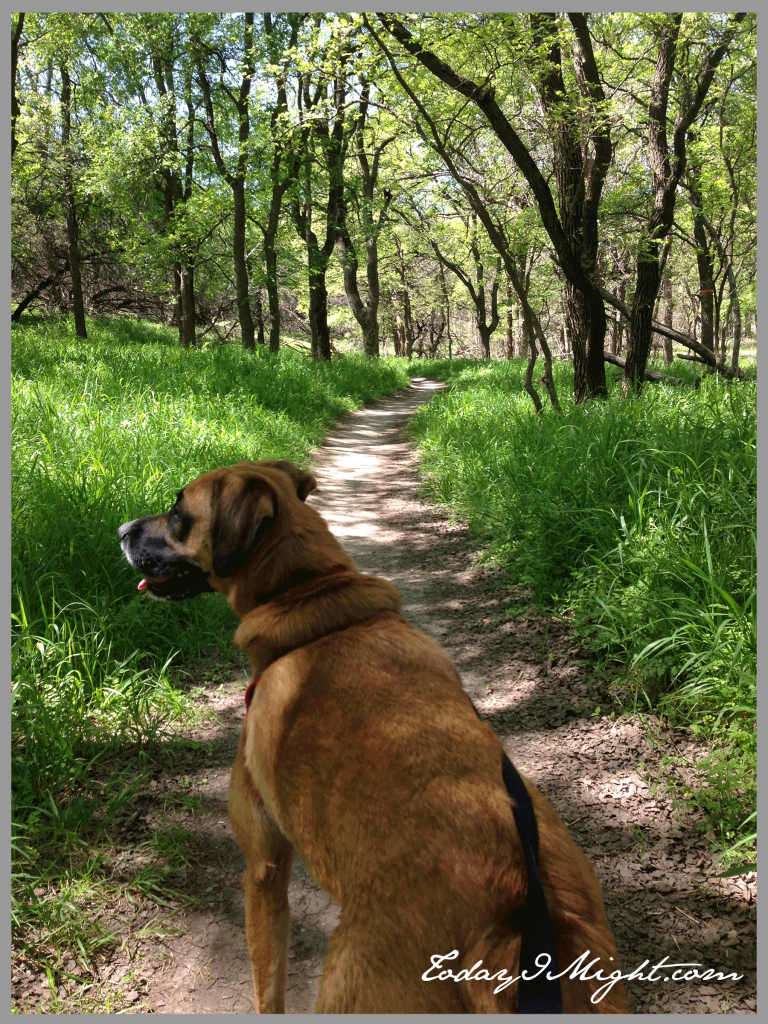 todayimight.com | Brushy Creek Regional Trail | Happy Trails