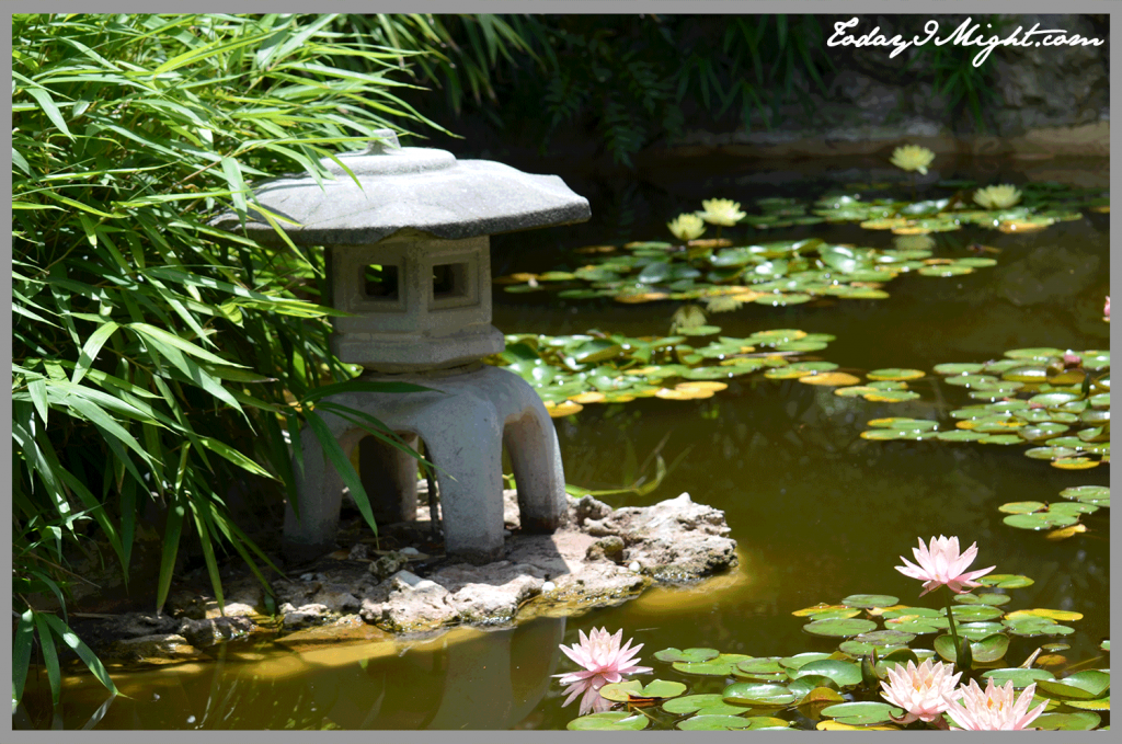 todayimight.com | Zilker Botanical Garden | Japanese Garden