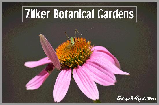 todayimight.com | Zilker Botanical Gardens, Austin, TX