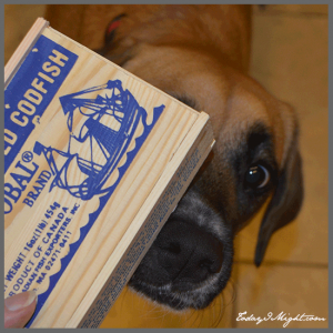todayimight.com | Sophie Sniffing Cod Box